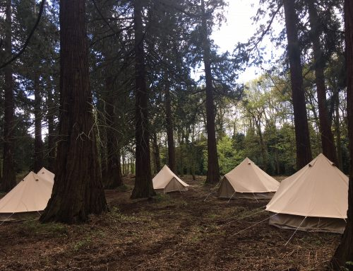 Camp Redwood
