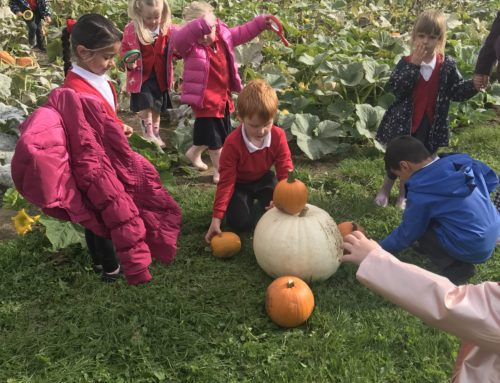 Foundation 2 Trip – Pumpkin Patch